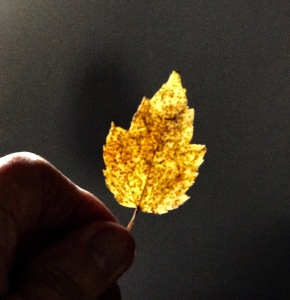 photo-yellow-leaf