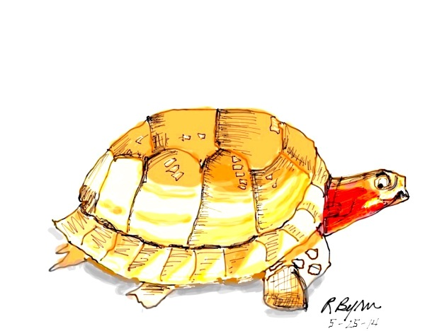 sketch-tortoise-1