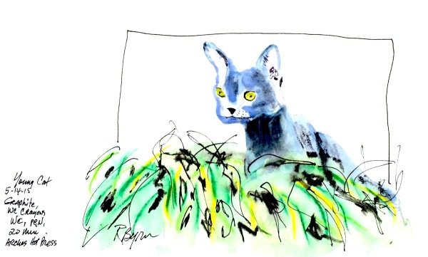 sketch-young-cat